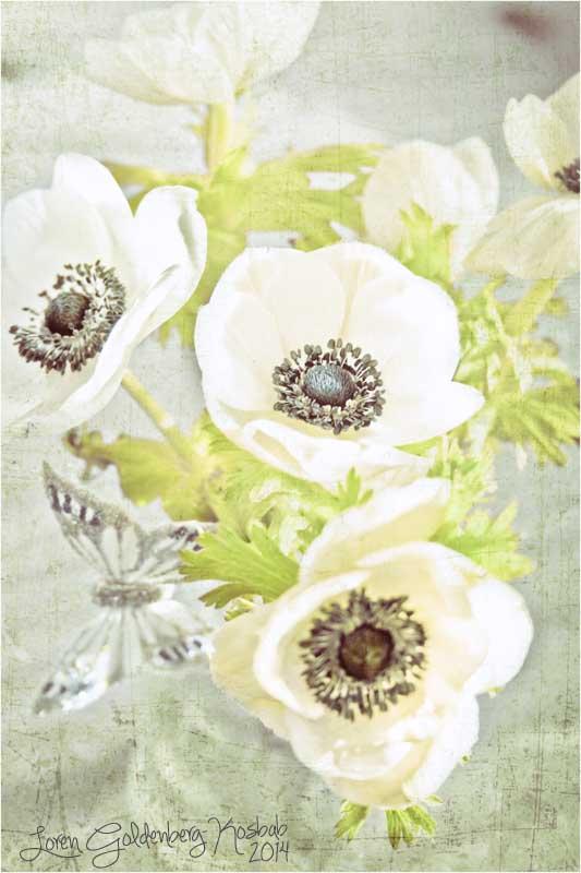 Floral Focus